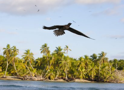 The Importance of the British Indian Ocean Territory for Seabirds
