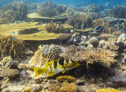 Monitoring Coral Reefs in the British Indian Ocean Territory